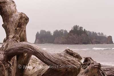 Rialto Beach on the Pacific Ocean, Olympic National Park.