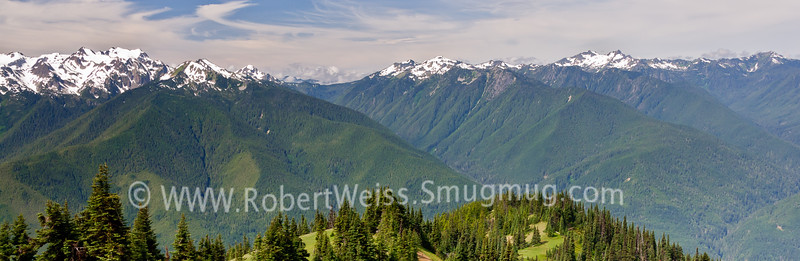 Panoramic vista along the Hurricane Ridge Trail.