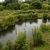 Washington Wetland Centre July 2021