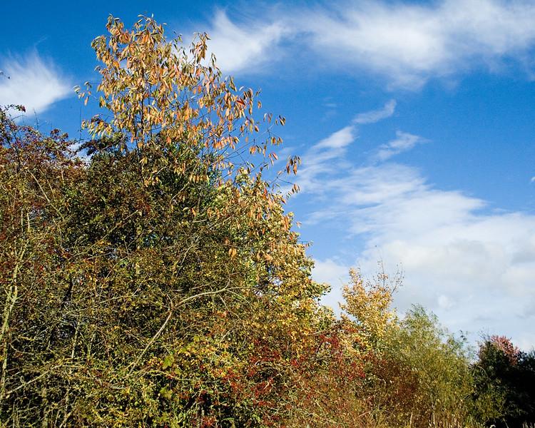 Autumn walk along the C2C pathway