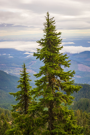 Mount Ellinor in the Olympic National Forest