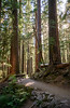 Sol Duc Falls trail in Olympic National Park