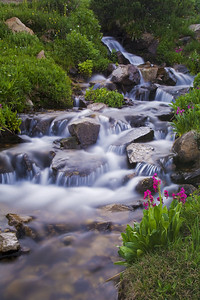"""Oasis""  During the summer months when the snow begins to melt, the hundreds of streams that form are a haven for incredible displays of wildflowers."