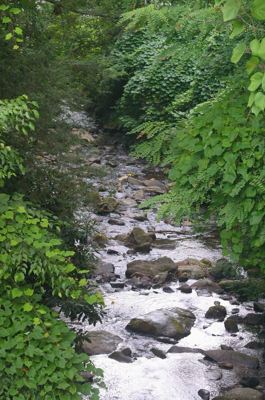 This is a section of the stream that flows into Lake Susan at Montreat College in Montreat, NC.