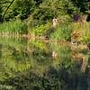 Ermitage Pond