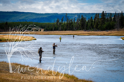 wlc Yellowstone 0919 5722019