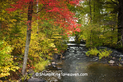 Manson Creek in Autumn, Oneida County, Wisconsin
