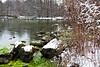 Spring Trail Pond, UW Arboretum, Madison, Wisconsin