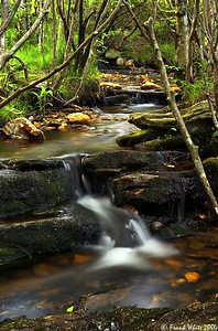 Mountain Stream, Smoky Mountains, NC