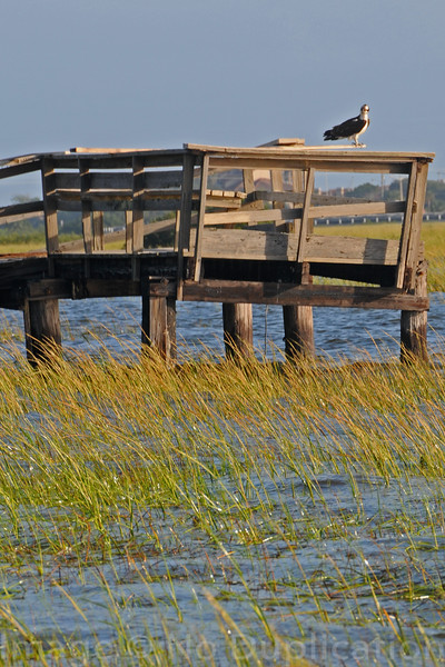 Dock Of The Bay 2008<br /> (2x3)