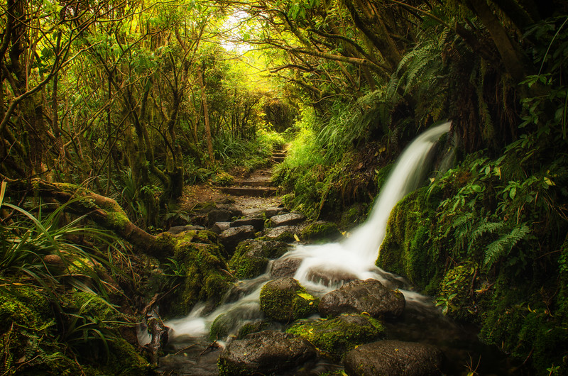 Lonely Falls, Taranaki/Egmont National Park.<br /> North Island, New Zealand