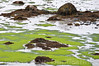 Low Tide In Maine 2009<br /> (2x3)