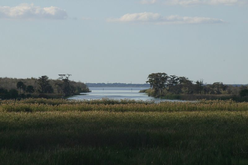 A nice view of the marsh land off of the St. John's River, just outside Deltona, Fl.