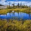 New Hampshire Mountain Pond - Firescrew Range, White Mountains