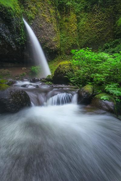 """""""In the Dark"""" - Oregon"""