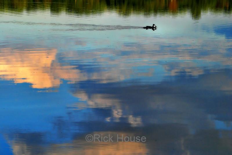 Moore Lake June 2004