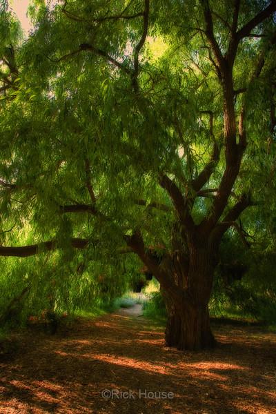 Secret Garden, Minnestoa Landscape Arboretum July 2006