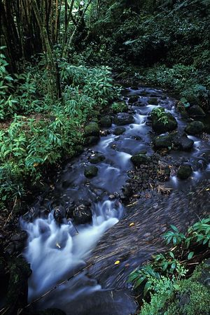 Stream running through bamboo forest <br /> near Akaka Falls, Hilo, Hawaii,<br /> ( Central Pacific Ocean )<br /> 1