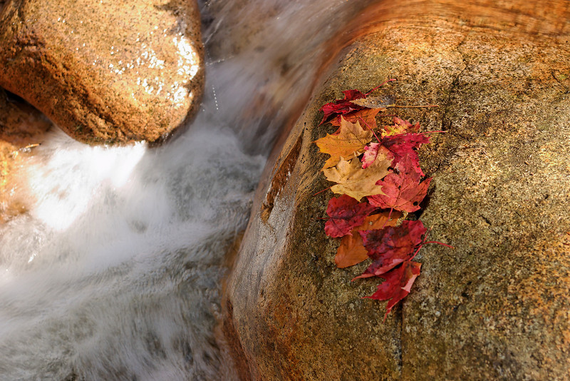 Leaves and rocks, White Mountains