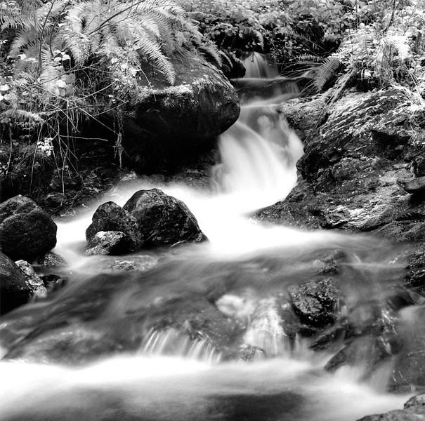 Duckabush Stream