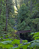 Silver Falls State Park-5687
