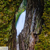 Wahclella Falls through the trees