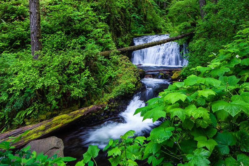 Dutchman Falls; Columbia River Gorge