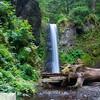 Weisendanger Falls - Multnomah Falls trail