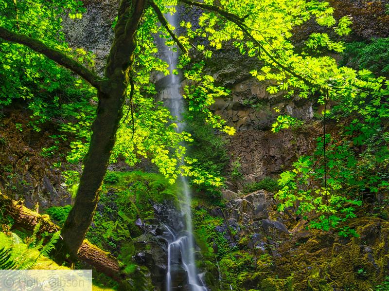 Tish Creek Falls