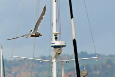 Gull and Rigging (70015686)