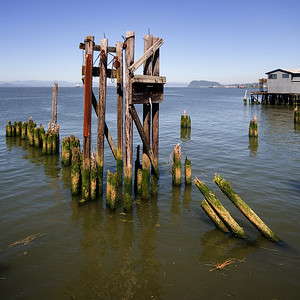 Astoria Pilings 2 (99903116)