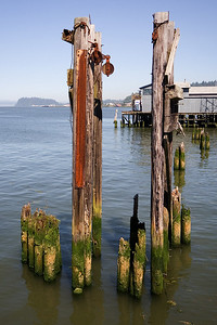 Astoria Pilings 1 (99903117)