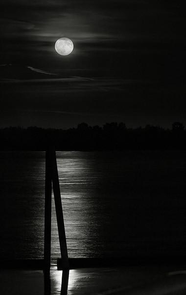 Moonglow (63507517)