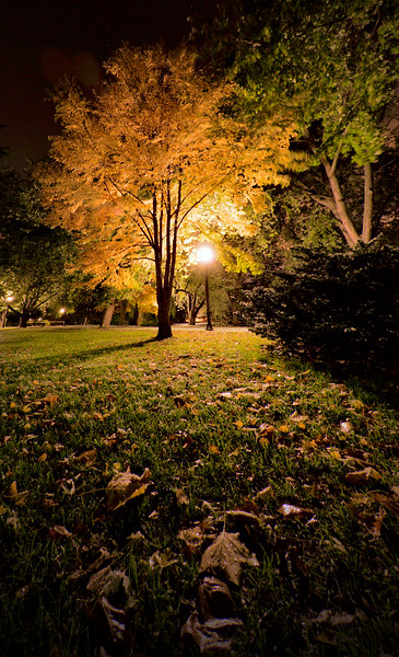 """Fallen""<br /> An autumn-coloured tree and leaves dropped during a windstorm.  Victoria Park, Kitchener, Ontario.  Image # AJ17"