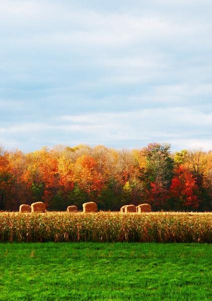 """Autumn Field No.3""<br /> Image # BK25"