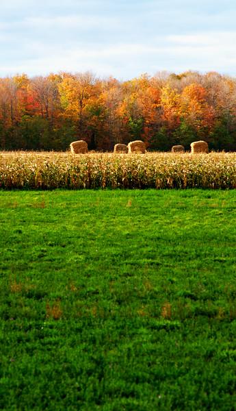 """Autumn Field No.2""<br /> Image # BK24"