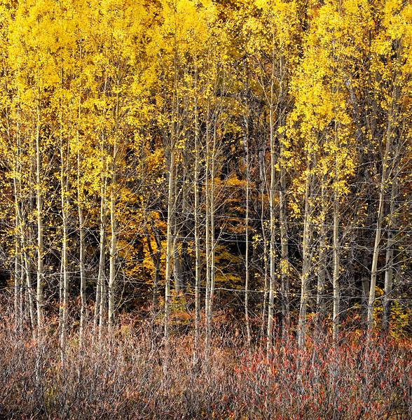 """Autumn Lines""<br /> Image # DI25"