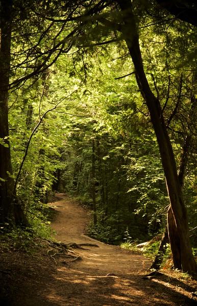 """Elora Walking Path""<br /> A sun-dappled walking path along the Elora Gorge in Elora, Ontario.  Image # AI14"