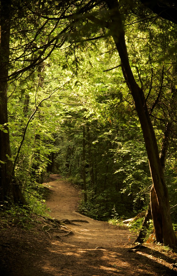 """Elora Walking Path""<br /> A sun-dappled walking path along the Elora Gorge in Elora, Ontario.  Image # AI14"