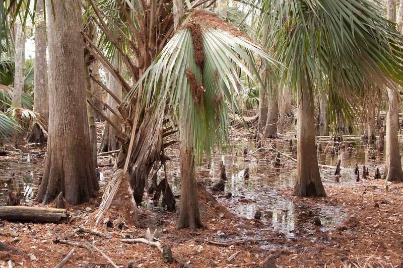 Cypress swamp_SS8340