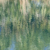 Reflections in a spring_SS7196