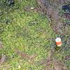 Algae Poluttion in River_SS4648