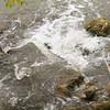 Montana Stream_SS83306