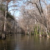 The famous Dora Canal in central Florida on a winter's day when the cypress trees have no leaves.