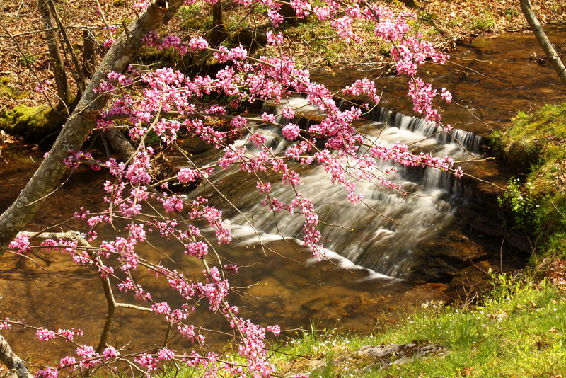 Redbuds over English Creek near the Natchez Trace in Giles County, Middle Tennessee. Thanks to Mike Serkownek (his version is much better).