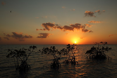 Sunset on Florida Bay