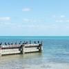 Florida Landscape Photographer Virginia Key Beach Ocean Waterscape Birds