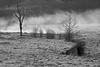 Frosty pasture, freezing pond, February morning; fog thinning....