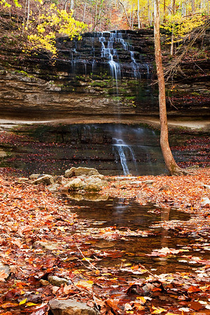 Autumn in Springhouse Hollow, and the channel is choked with fallen leaves. Yellow beech and sassafras, and red oaks pepper the ridge above the falls.