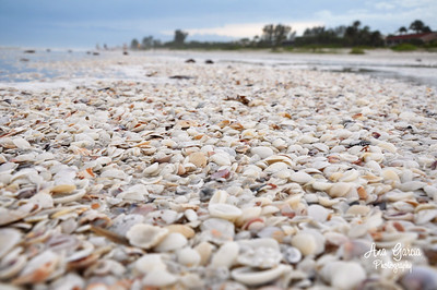 """Seashells In The Sand"" 